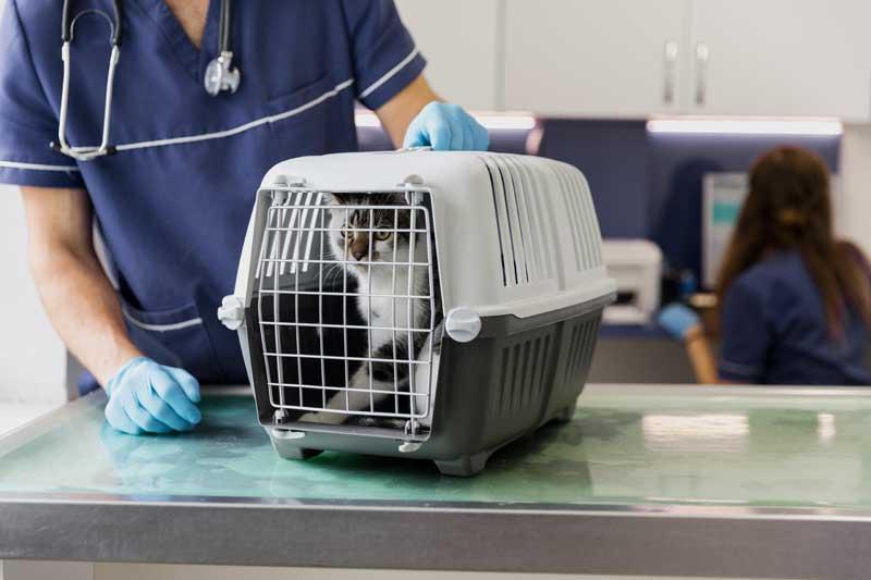 רשלנות רפואית בטיפול בחיות
